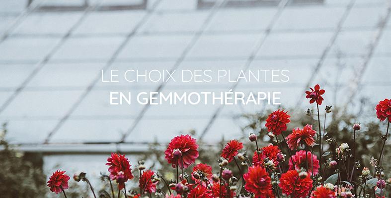 Les plantes en gemmothérapie
