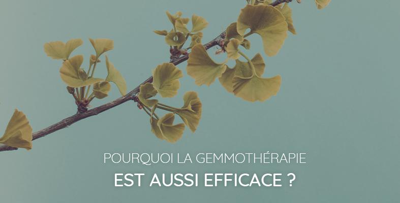 L'efficacité de la gemmothérapie