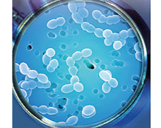 Les probiotiques ont des effets positifs sur la santé et le bien-être