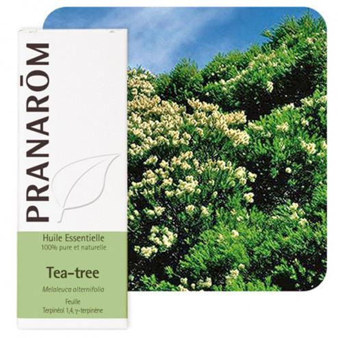 Huile essentielle tea tree - arbre à thé