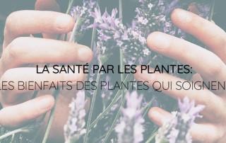 Plantes qui soignent